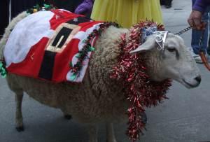 Festive sheep